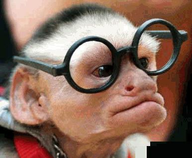 monkey_glasses